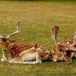symbolisme animal et végétal